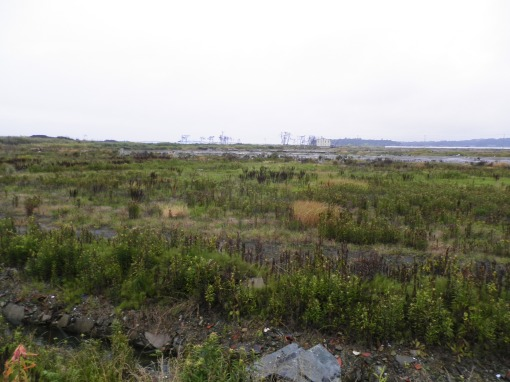 A line of tetrapods in the middle distance
