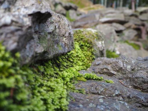 Precarious plantations